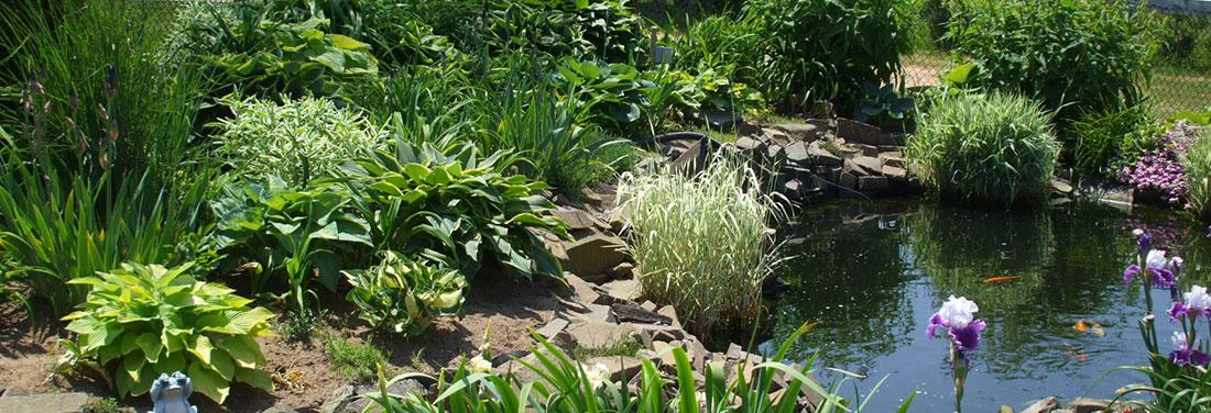 Gardens-Koi-Pond