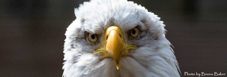 eagle-slide